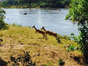 Majete Game Reserve, Blantyre, Malawi